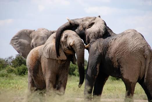 Grey Black Elephant on Green Grass Field Free Photo