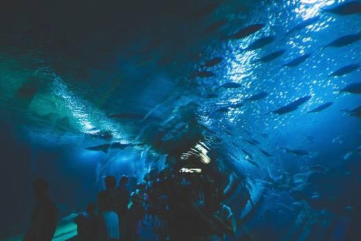 Under Aquarium Fish Free Photo #403708
