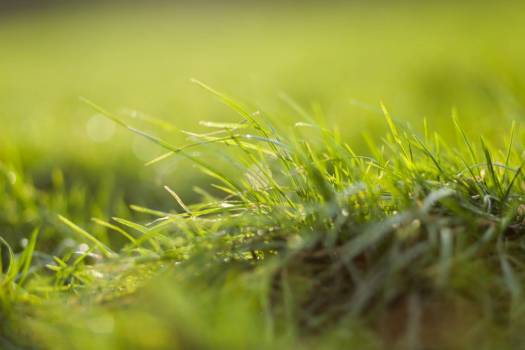 Closeup Grass Sun Free Photo Free Photo