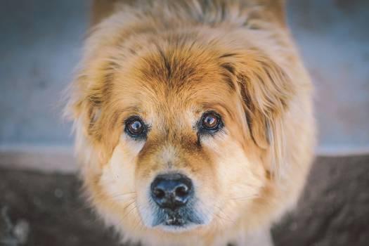 Close-up of Cute Dog Free Photo #403839
