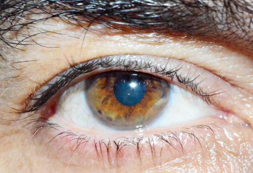 Human Eye Free Photo