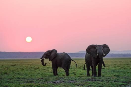 Elephant Mammal Safari #404386