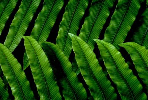 Green Leaves Pattern Free Photo #404467