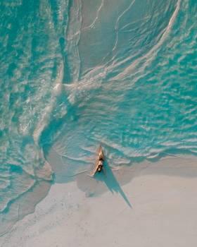 Fish Ocean Sea #404506