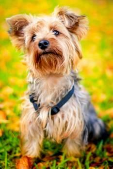 Animal dog pet cute #40455