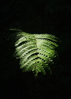 Fern Plant Forest #404897
