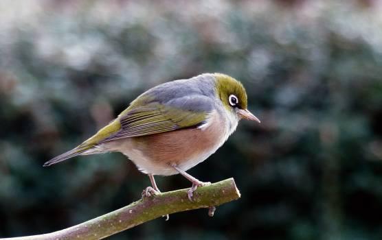 Bird Perched on Tree Free Photo #404951