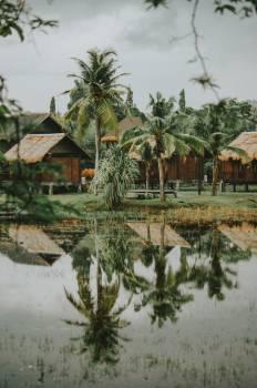 Resort Tree Palm #404971