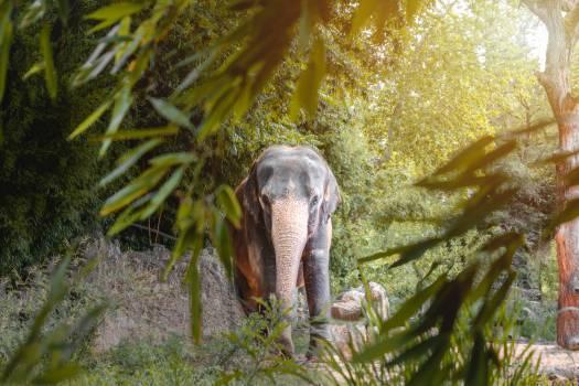 Tusker Elephant Mammal #405042