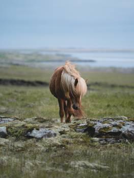 Steppe Plain Land Free Photo
