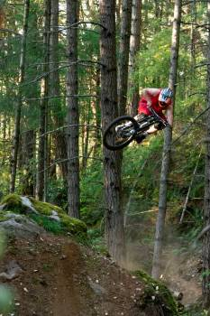 Tree Mountain bike Bicycle #405125