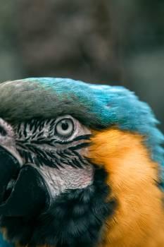Macaw Parrot Bird #405324