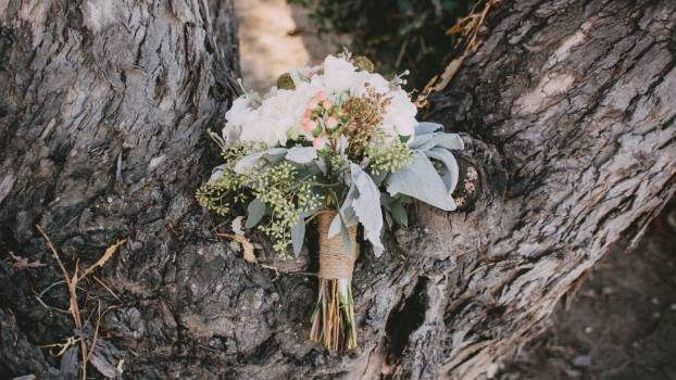 A Bouquet of White Petaled Flower Place on the Middle of Tree Trunk Free Photo