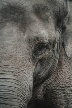 Elephant Mammal Safari #405547