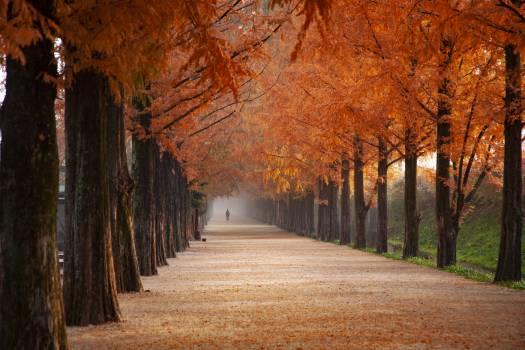 Orange Trees #405797