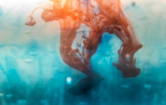 Jellyfish Invertebrate Sea #405981