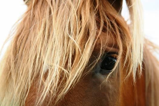 Horse #40598