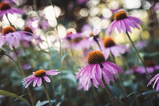 Flower Plant Vascular plant #405997