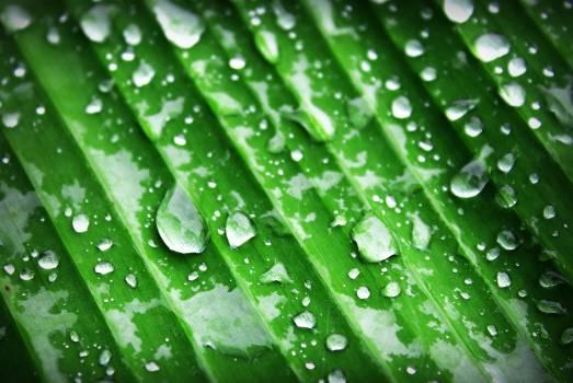 Water Dew Free Photo