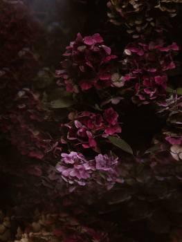 Shrub Flower Plant #406425