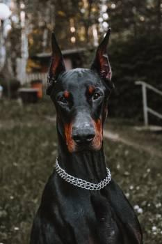 Watchdog Dog Pet #406524