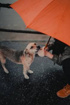 Dog Pet Leash #406700
