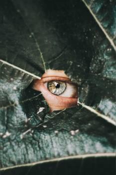 Stingray Ray Eye #406737