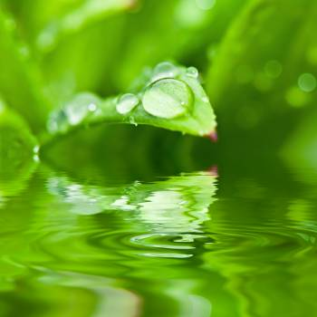 Rain Drops on Green Plant #40673