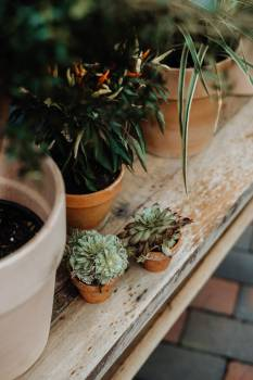 Pot Container Plant Free Photo