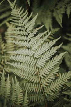 Fern Plant Forest #406893