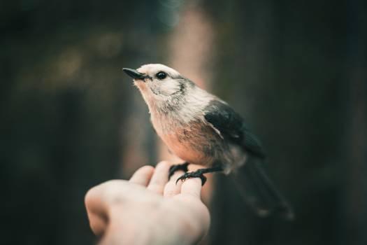 Warbler Bird Wildlife #406979