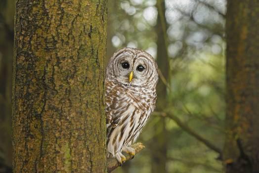 Owl Bird Beak Free Photo