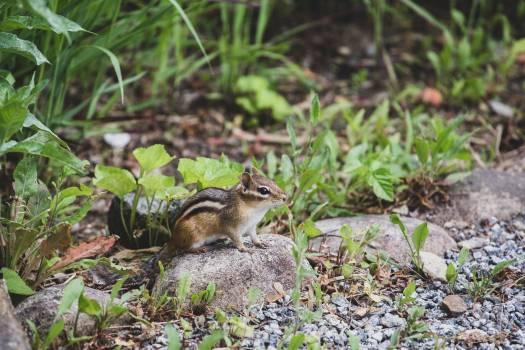 Rodent Mammal Wildlife #407023