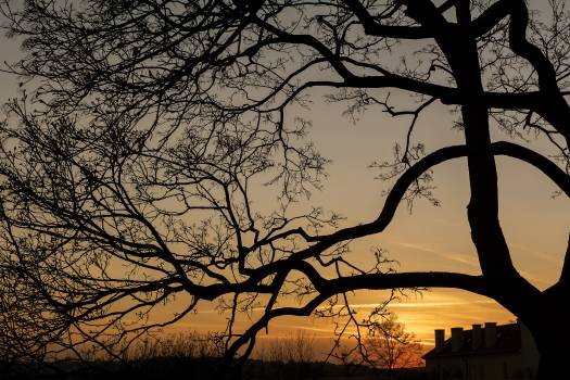 Silhouette of tree branches - free stock photo #407026