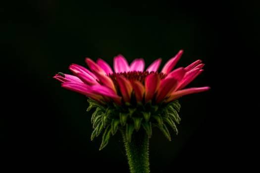 Daisy Flower Petal #407225