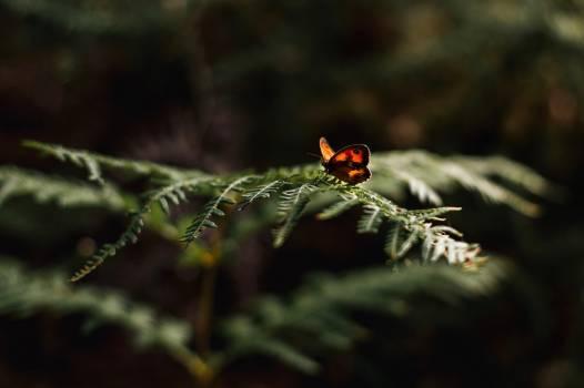 Ladybug Beetle Insect #407291
