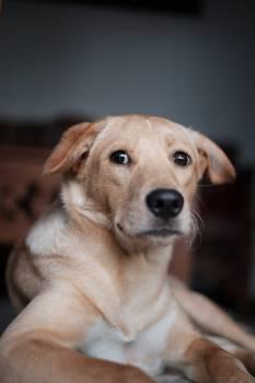 Dog Retriever Canine Free Photo