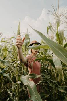 Plant Corn Agave Free Photo