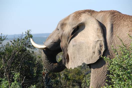 Grey Elephant by the Bushes at Mountain Top during Daytime #40749