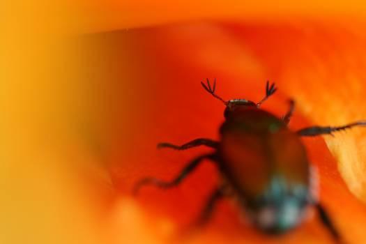 Ant Insect Arthropod #407719