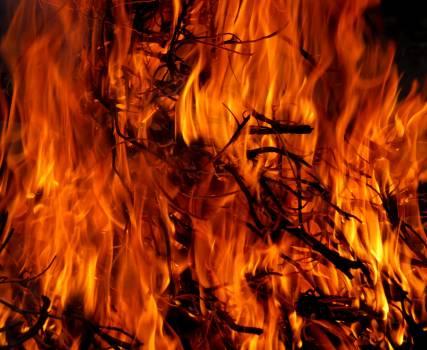 Burning Tree in Time Lapse Free Photo
