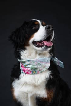 Fashion Model Dog #407892