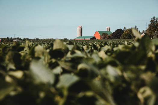 Red And Green Farm Behind Crop Field #407910