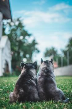 Dog Hound Fur #408107