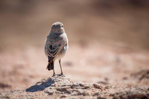Junco Finch Bird #408245