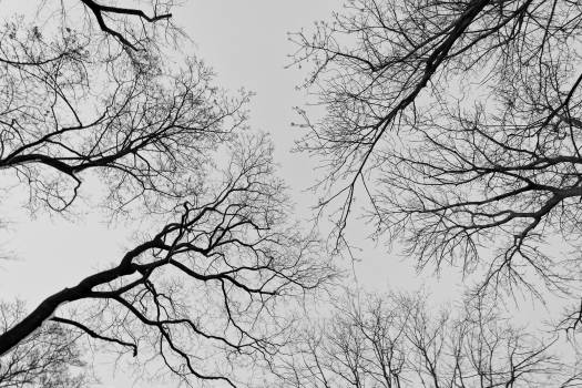 Upward View Into the Trees - Free Image For Commercial Use #408429