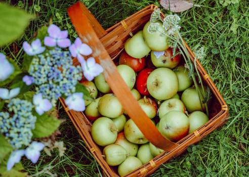 Fruit Vegetable Apple #408437