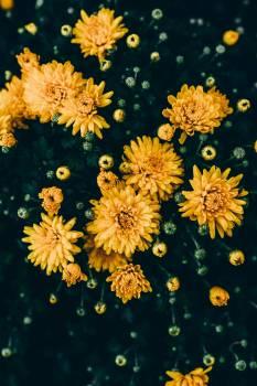 Flower Floral Design #408602