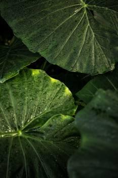 Plant Herb Vascular plant #408641