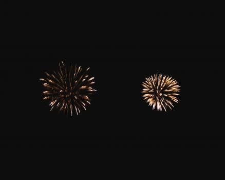Dandelion Firework Herb #408690